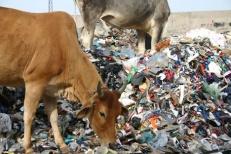 garbage-dump-india